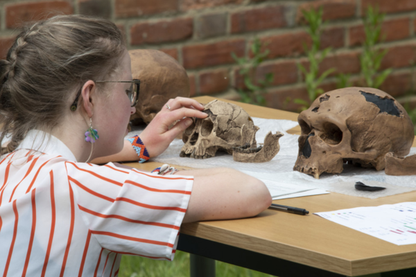 Photo of a student studying casts of early hominid skulls