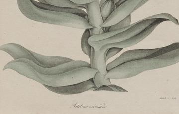 Image © Museum of Fine Arts, Boston